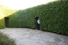 This is the kind of privacy wall I need. : )