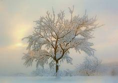 Snowy dream