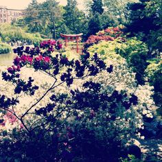 The Japanese garden at Brooklyn Botanical Garden.      #brooklyn     #brooklyn botanical garden     #japanese     #japanese garden     #shinto