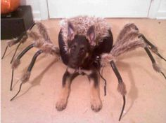 My dog wanted to dress up for Halloween this year...