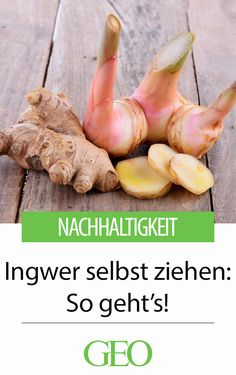 Ingwer selbst ziehen – so geht's! Growing Horseradish, Cabbage Plant, Pruning Fruit Trees, Apple Varieties, Fast Growing Trees, Plant Diseases, Plants Are Friends, Root Vegetables, Amazing Gardens