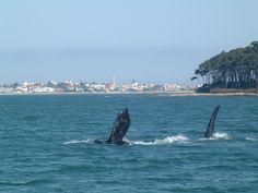 Punta del Este en Agosto, cuando llegan las ballenas CrazyPuntaDelEste.com Follow us @TheCrazyCities.com