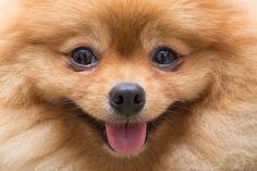 Nämä nauravat koirat saavat hymyn huulillesi – katso kuvat