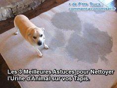 Il existe des trucs simples et efficaces pour nettoyer les taches d'urine de votre animal. Voici les 3 meilleures astuces pour nettoyer l'urine d'un animal sur votre tapis. :-) Découvrez l'astuce ici : http://www.comment-economiser.fr/nettoyer-urine-animal.html?utm_content=bufferfb37d&utm_medium=social&utm_source=pinterest.com&utm_campaign=buffer