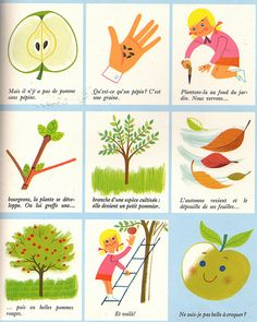 """""""How Apples Grow"""" from """"La Forêt"""" by Alain Grée. Would need to translate to English but it's super cute :) Activities For Kids, Crafts For Kids, Apple Festival, French Worksheets, Kindergarten Language Arts, Core French, French Education, French Resources, French Immersion"""