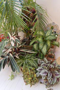Urban Jungle Bloggers: Plant Trends 2017