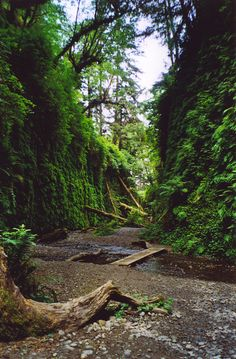 Fern Canyon in Prairie Creek Redwoods State Park, Humboldt County, California