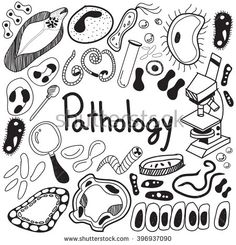 Pathology biology doodle handwriting icons of germ and pathogen for human disease such as virus, bacteria, fungus, amoeba, and Protozoa in white isolated paper background for education (vector)
