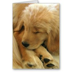 Shop Golden Retriever Sweet Puppy Mother's Day Card created by AugieDoggyStore. Personalize it with photos & text or purchase as is! Dogs Golden Retriever, Golden Retrievers, Retriever Puppies, Cute Puppies, Dogs And Puppies, Mother's Day Greeting Cards, Dog Cards, Sleeping Dogs, Puppy Pictures