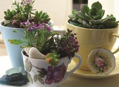 Tea cup gardens.  @heyday sells these an the supplies to DIY!