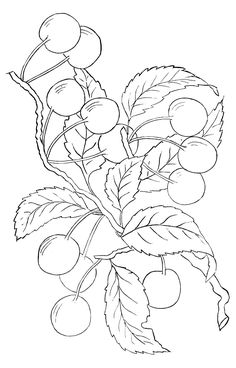 Cherry embroidery pattern from The Graphics Fairy