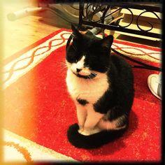 Jasper. #catstagram #catsofinstagram #cats