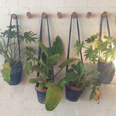 ∆ hanging plants in denim hangers. Groovy