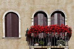 Splendid flowers in Venice. - Life Aperture