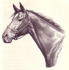 C W Anderson - children's books about horses
