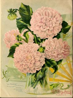 Maule's seed catalogue : 1897