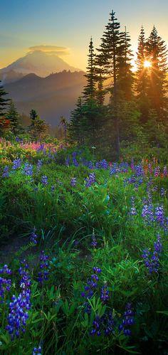 Mount Rainier southeast of Seattle, Washington • photo: Inge Johnsson on RedBubble