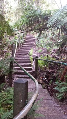 So whose bright idea was it to climb up a mountain on my day off? Oh, that would be me.... RDO Melbourne: 1000 Steps Kokoda Track Memorial Walk, Upper Ferntree Gully http://www.rdomelbourne.com/2015/05/1000-steps-kokoda-track-memorial-walk.html
