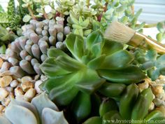 Under The Table and Dreaming: My Tuesday {Ten} - Building a Succulent Dish Garden