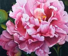Pink Peony by Kathy Miller-watercolor