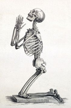 Framed Print - Human Skeleton On Its Knees Praying (Picture Poster Vintage Art) Skeleton Drawings, Skeleton Tattoos, Skeleton Art, Skeleton Face Drawing, Dinosaur Skeleton, Human Anatomy Art, Anatomy Drawing, Human Skeleton Anatomy, Anatomy Sketches