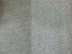 carpet steam