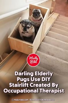 Knee Surgery, Occupational Therapist, Dog Pin, Dog Memes, How To Raise Money, Pugs, Climbing, Gain, Stairs