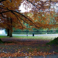 #Brussels parks during the #autumn great pic by @photopattyque