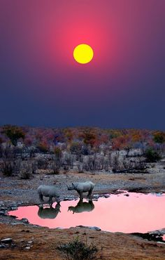 Sunset with Rhinos - Etosha National Park, Namibia, Africa
