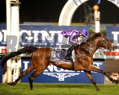 Coolmore and partners' St Nicholas Abbey spoiled the international debut of sensational filly Gentildonna as he drew off in the stretch from the reigning Japanese Horse of the Year. Photo by Dave Harmon Horse Profile, Order Photos, Photo Store, Thoroughbred Horse, Saint Nicholas, Horse Racing, Saints, Horses, Wells