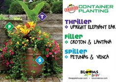 #containergardening using elephant ear, petunias, venca, lantana #terrehaute #applehouse #flowerpots