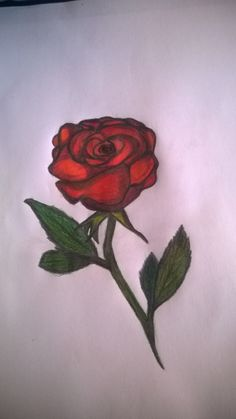 rose by pencils