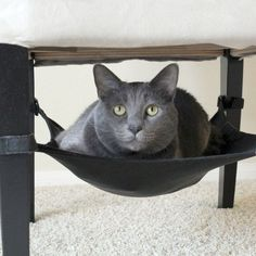 Cat Hammmock #RussianBlueCat