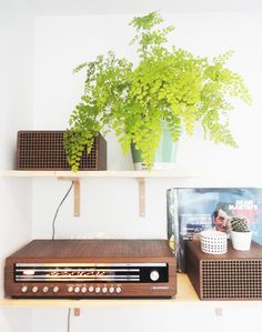 Urban Jungle Bloggers / Plant Shelfies - St. Adiantum fern