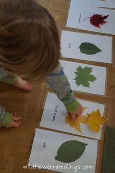 Découverte du monde : cartes pour l'aide à la confection de l'herbier. L'enfant peut comparer les feuilles qu'il trouve dans les parcs et jardins avec celles des cartes.