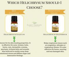 Which Helichrysum should you choose?