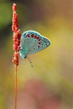 aqua- colours in nature Butterfly Kisses, Butterfly Wings, Blue Butterfly, Butterfly Pictures, Butterfly Flowers, Beautiful Bugs, Beautiful Butterflies, Beautiful Creatures, Animals Beautiful