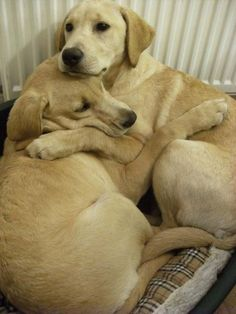 This dog comforted her sister during a thunderstorm. | The 50 Cutest Things That Ever Happened