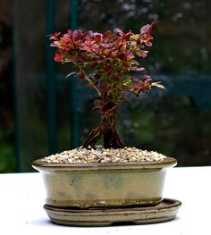 The art of Bonsai - An arboretum bonsai