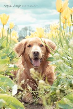 33 Best Dogs Images Dogs Puppies Cute Animals