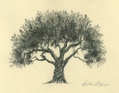 Olive Tree Pen and Ink Drawing - Fine Art Print - Watercolor Painting - Sympathy Gift - Symbol of Peace - Technical Drawing - Small Art Pine Tattoo, Tattoo Tree, Illustration Pen And Ink, Botanical Illustration, Olive Tree Tattoos, Tree Sketches, Ink Pen Drawings, Tree Drawings, Green Watercolor