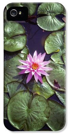 water lily iPhone Case by Joana Kruse