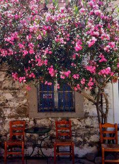 Κοντιάς Samos, Greek House, Greek Islands, Dream Vacations, Decoration, Lush, Philosophy, Around The Worlds, Outdoors