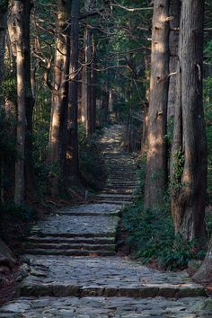 bluepueblo: Forest Stairs, Japan photo via margaret