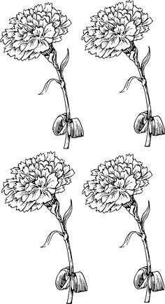 Free Image on Pixabay - Carnations, Drawing, Pattern, Art