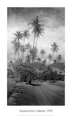 Coconut Grove, #Lahaina, Circa 1910  #Maui #Hawaii