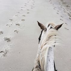 Must must go horseback riding on the beach