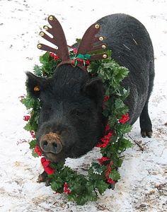 Christmas Piggy...I want one!