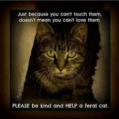 Cat Quotes, Animal Quotes, Animal Facts, Animal Memes, Beautiful Cats, Animals Beautiful, Beautiful Creatures, Crazy Cat Lady, Crazy Cats