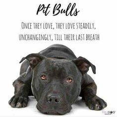 This is so true I love my pitbull he even tells me good morning in his own way Terrier Dogs, Bull Terriers, Pitbull Terrier, Pitbulls, Dog Rules, Pit Bull Love, Beautiful Dogs, I Love Dogs, Dogs And Puppies